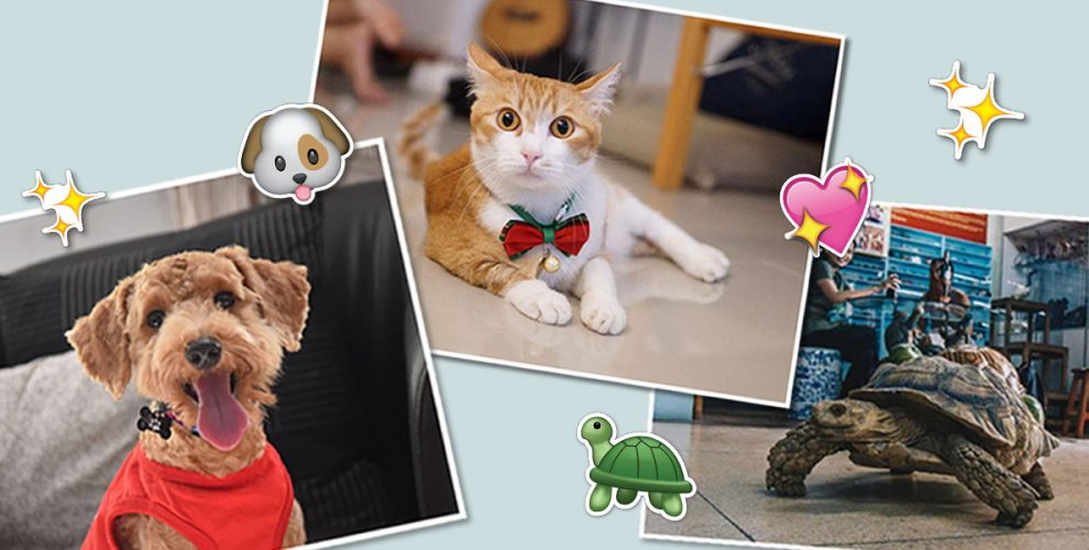 12 Animal Shelters To Volunteer At In Singapore Even If You