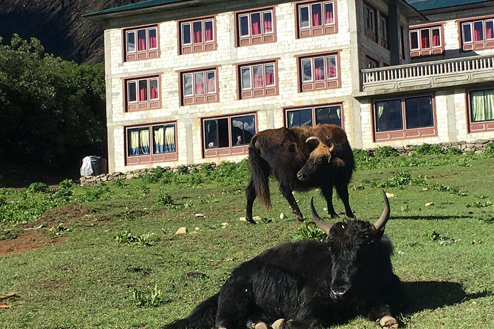 yaks-guest-house