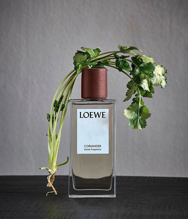 coriander-perfume