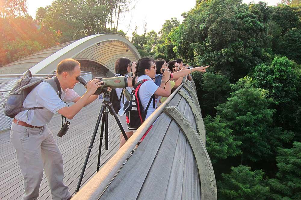 me-time-ideas-singapore-birdwatching