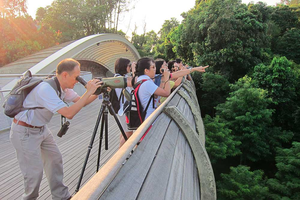 me-time-ideas-singapore-birdwatching