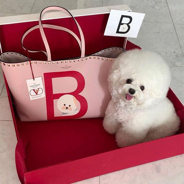 valentino bichon bag