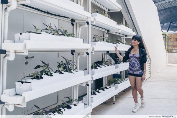 funan mall urban rooftop farm self care